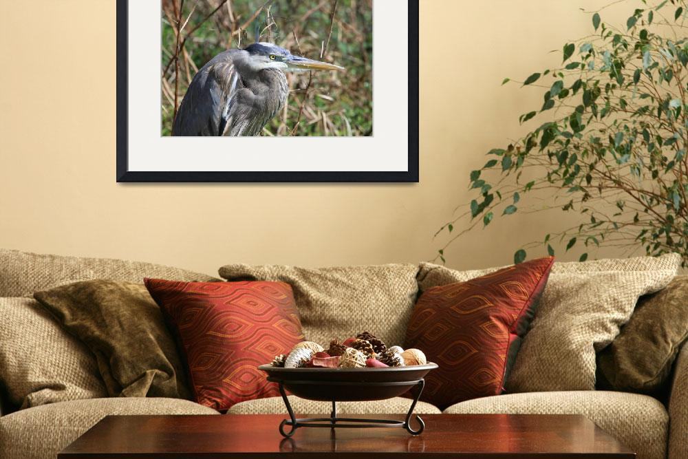 """""""Great Blue Heron Head&quot  by BABowenphotography"""