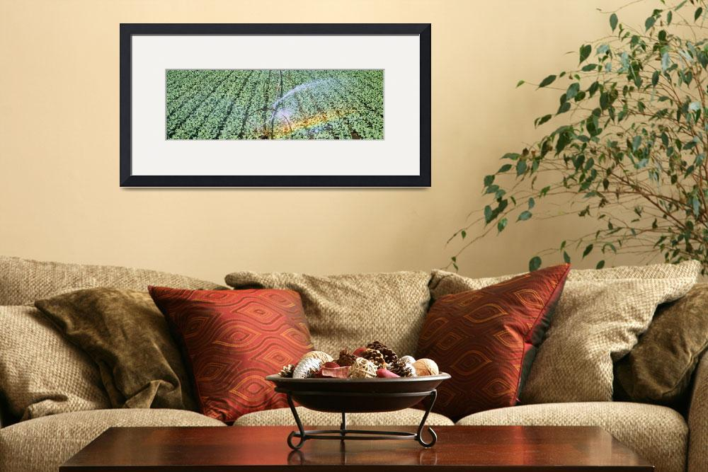 """""""Irrigation Broccoli Crop OR&quot  by Panoramic_Images"""