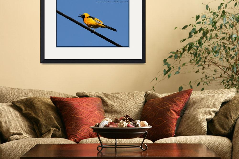 """""""Hooded Oriole&quot  (2013) by shravansphotography"""