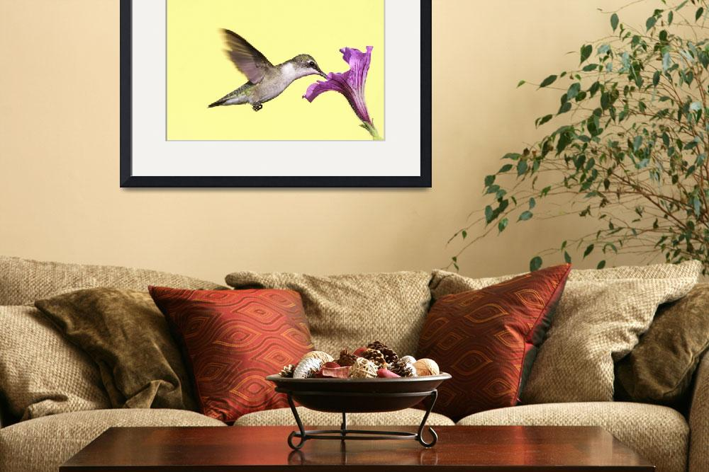 """""""Ruby-throated Hummingbird (archilochus colubris)&quot  by Steve_Byland"""