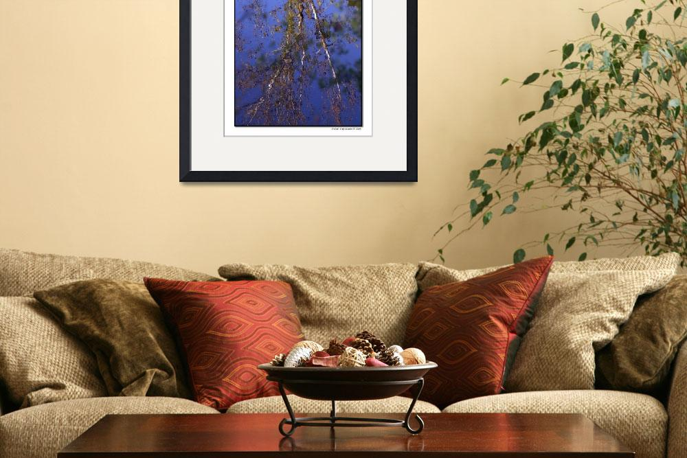 """""""Reflections&quot  (2008) by artisticexpressions"""
