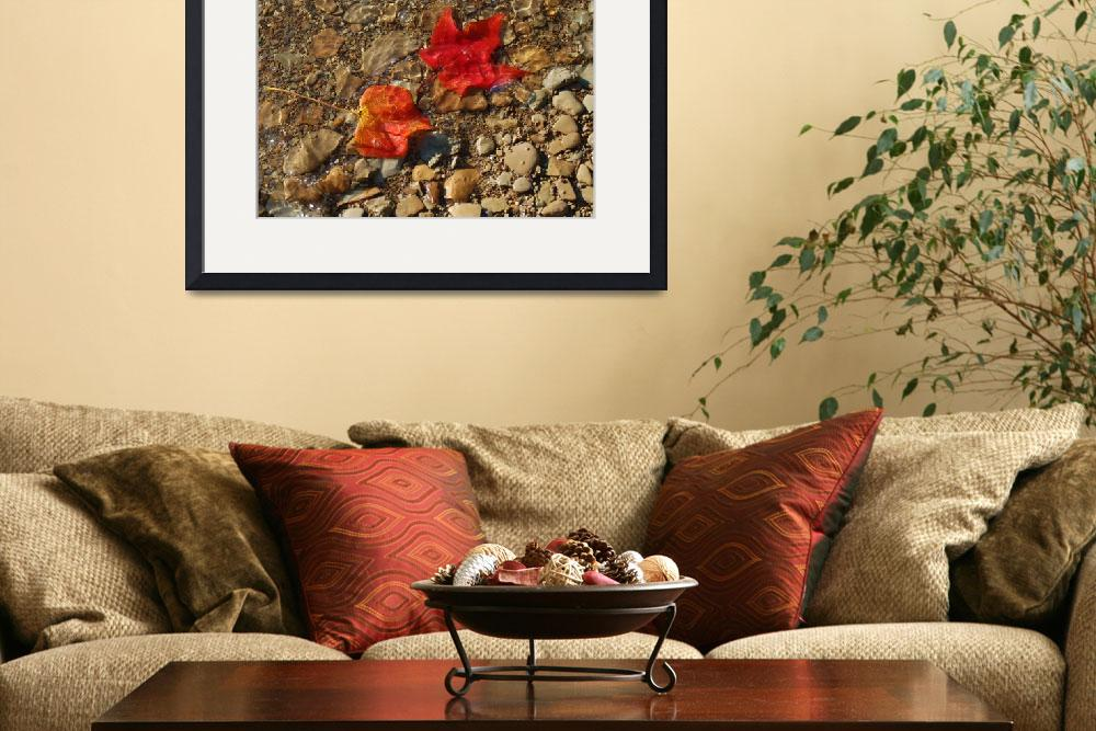 """""""Floating Fall Foliage&quot  (2006) by ashcorphotos"""