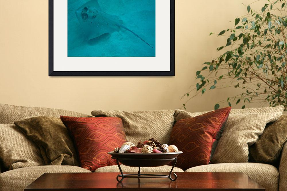 """""""Bluespotted Stingray&quot  (2011) by annazeisler"""