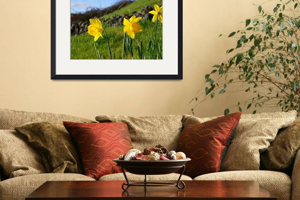 """Country Spring Hillside Meadow Daffodil Flowers&quot  (2014) by BasleeTroutman"