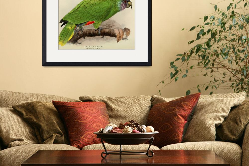 """""""Vintage Illustration of a Green Parrot (1901)&quot  by Alleycatshirts"""