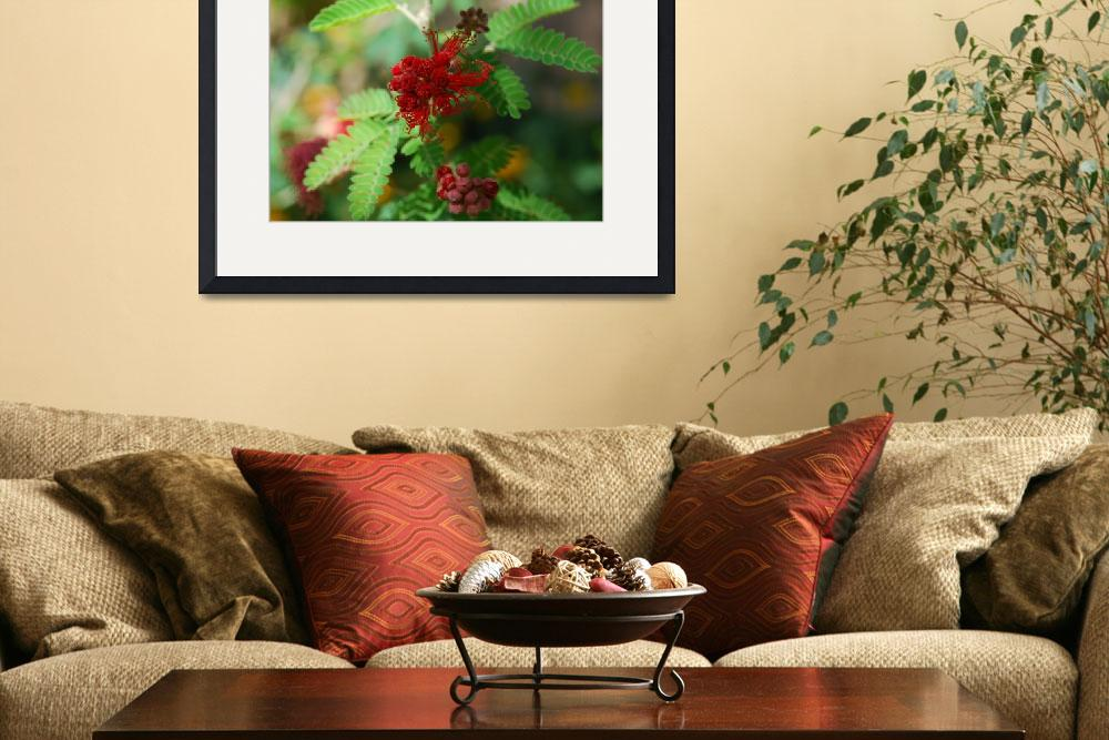 """""""Red Fairy Duster""""  (2008) by LeeTravathan"""