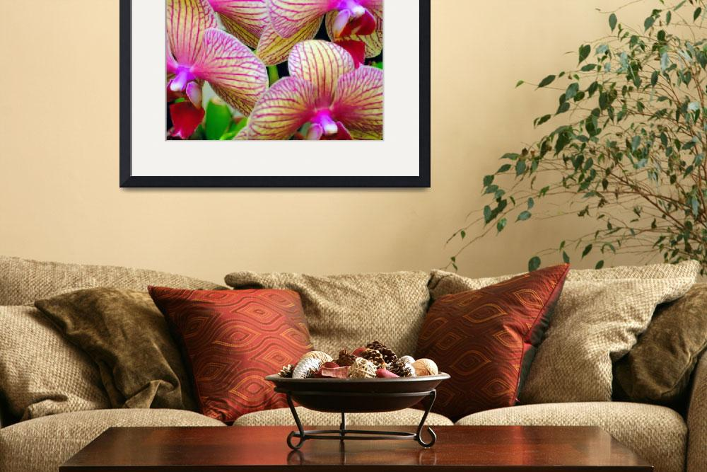 """""""Orchidomania&quot  (2006) by Inksquirt"""