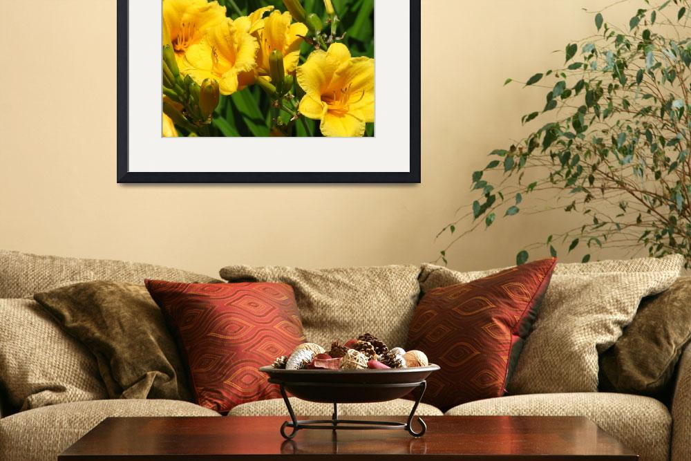 """""""Yellow flowers&quot  (2009) by birdphotosandmore"""