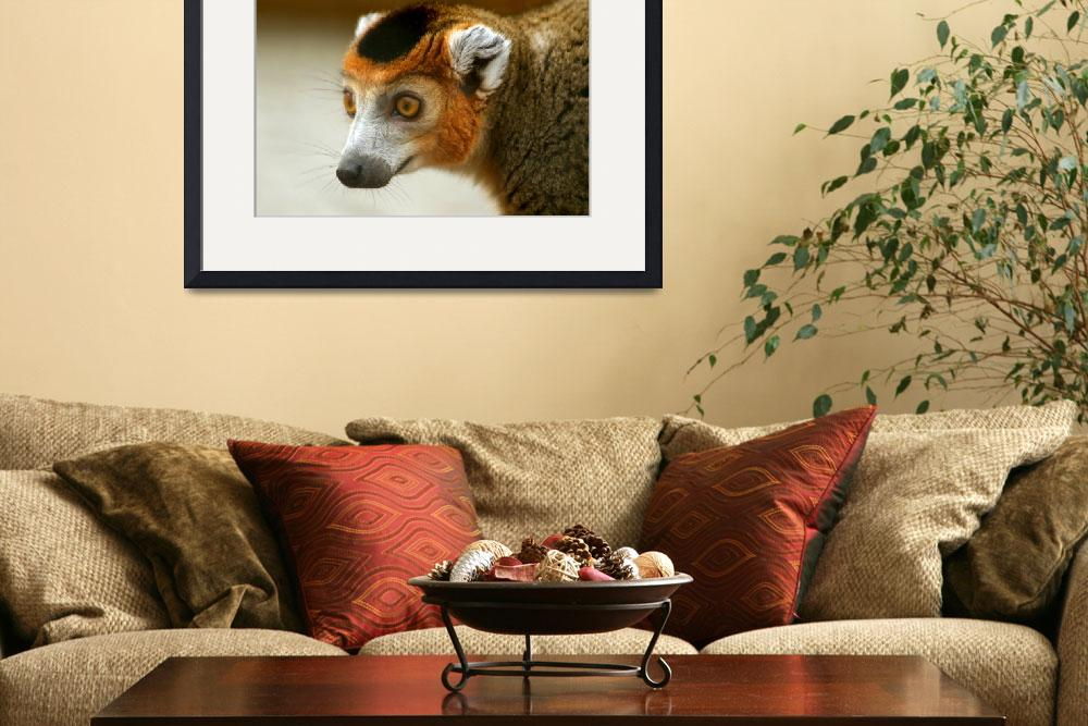 """""""Male Crowned Lemur&quot  by Serena"""