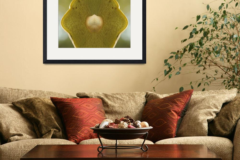 """""""Mushroom  Soft Under Belly by Bill McAllen ©&quot  by McallenPhotography"""