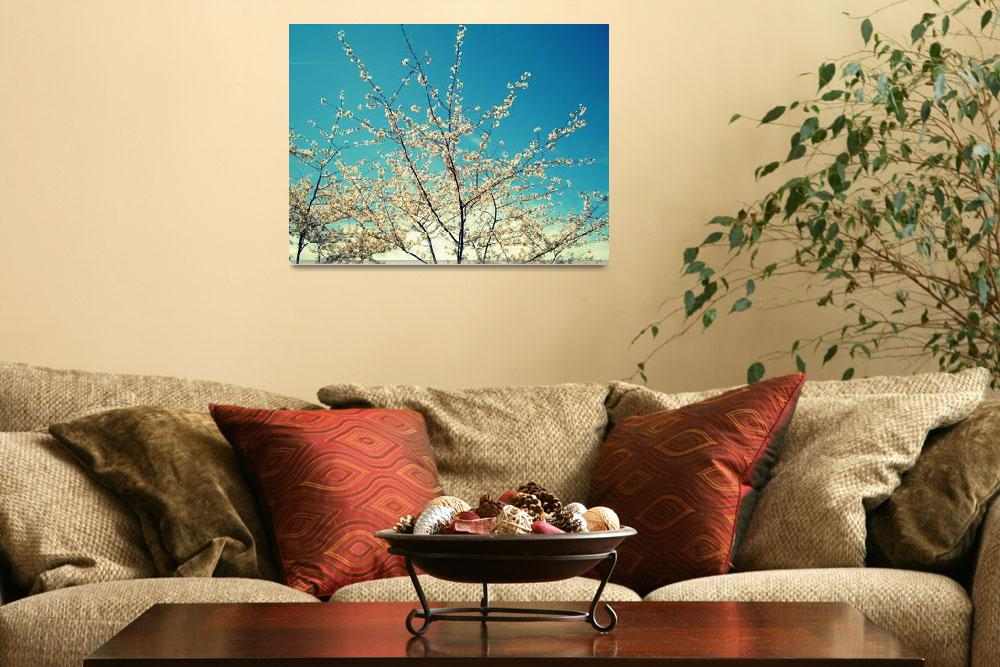 """""""Cherry blossoms""""  by marycalissa"""