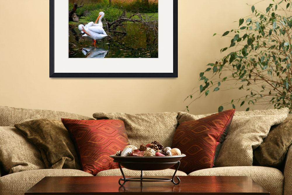 """Pelican Pair in Bayou 2&quot  (2011) by ShaneWells"