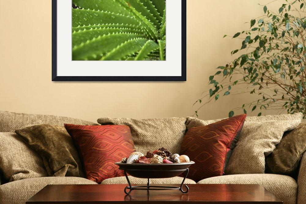 """""""agaves&quot  by dasar"""
