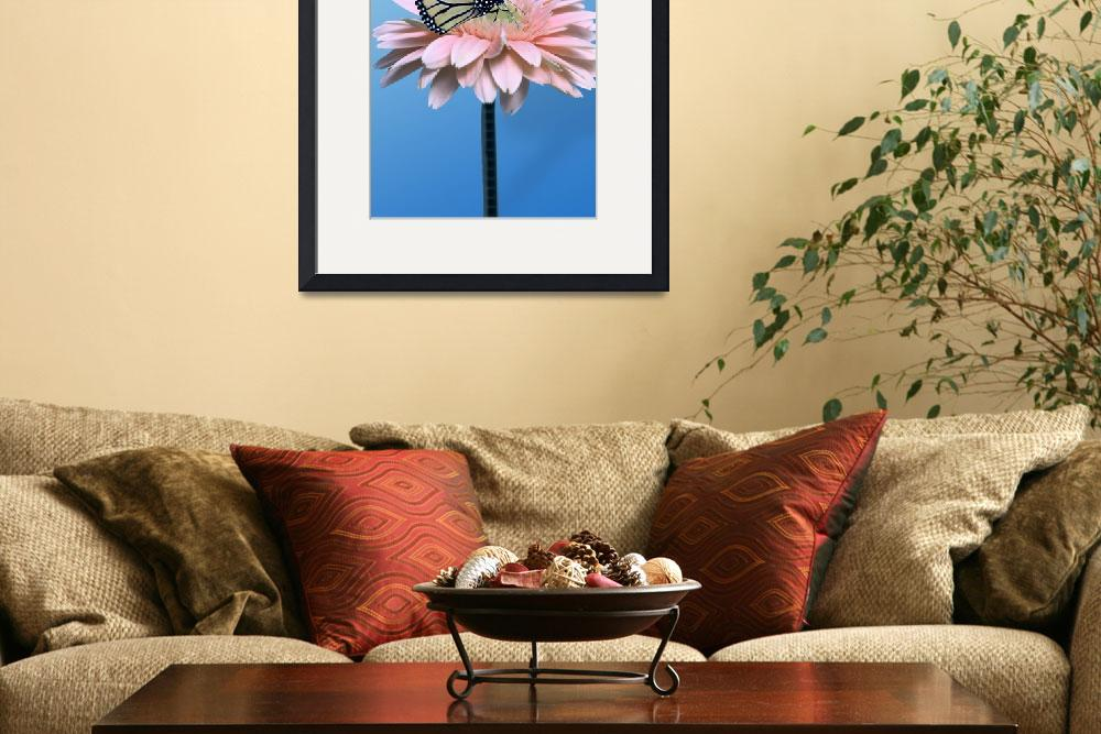 """Gerbera Daisy and Butterfly""  by roim"