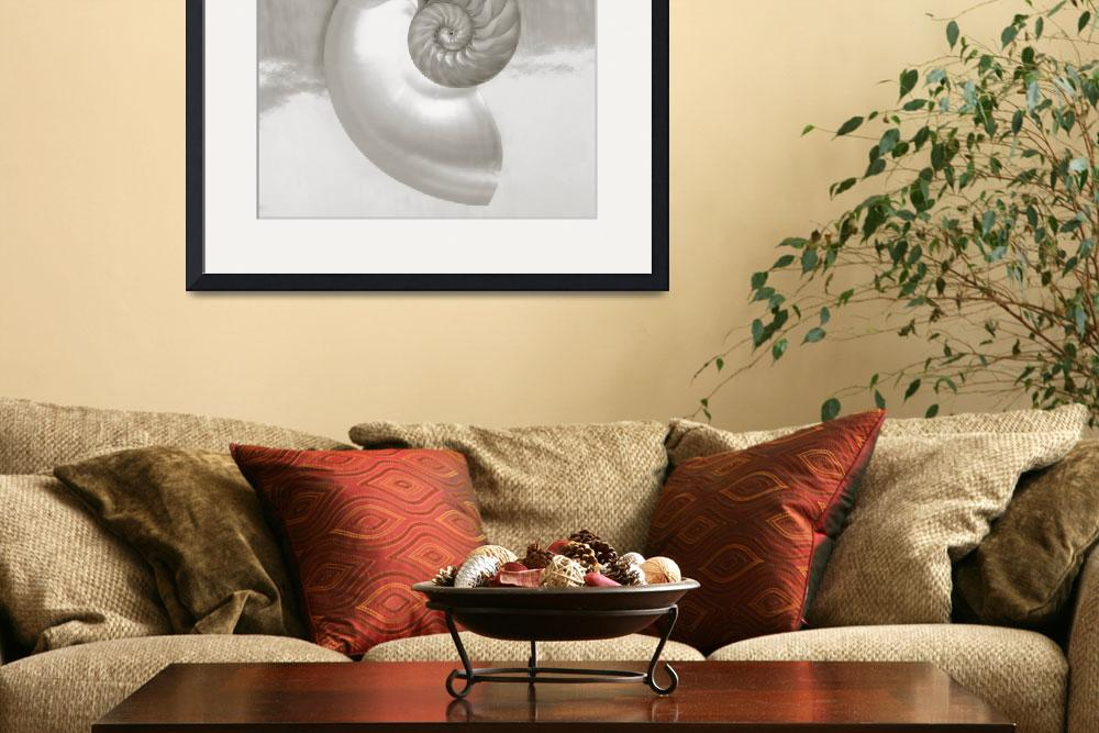 """""""Pearl Nautilus Shell Half Showing Chambers And Spi&quot  by DesignPics"""