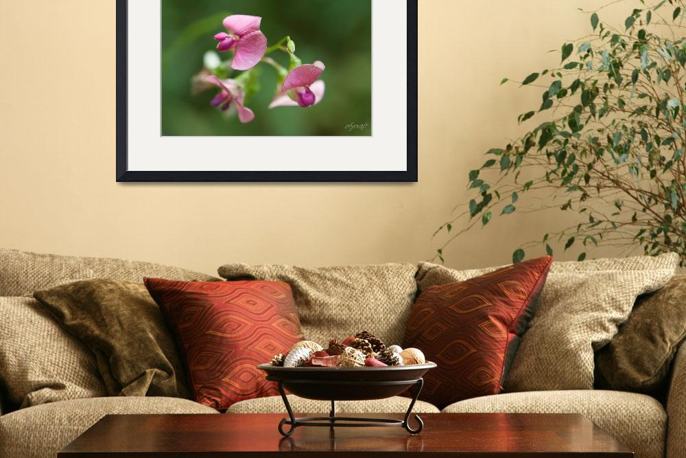 """""""wild Sweetpeas&quot  (2009) by pbycraftphotography"""