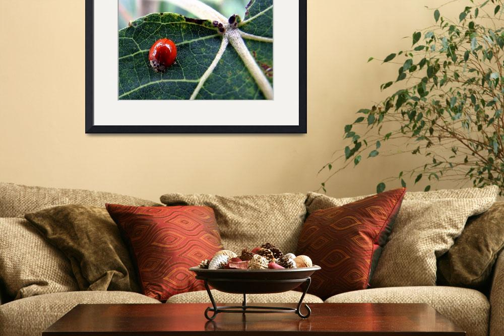 """Lady Bug&quot  (2009) by bavosiphotoart"