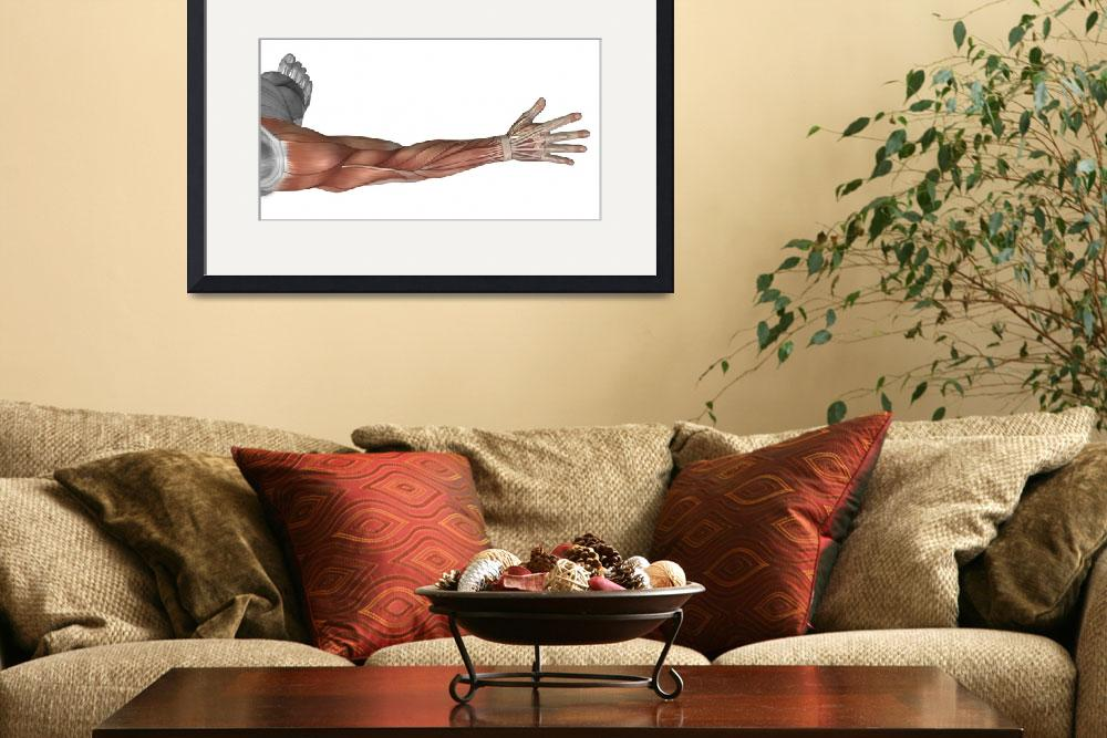 """Muscle anatomy of the human arm, posterior view&quot  by stocktrekimages"