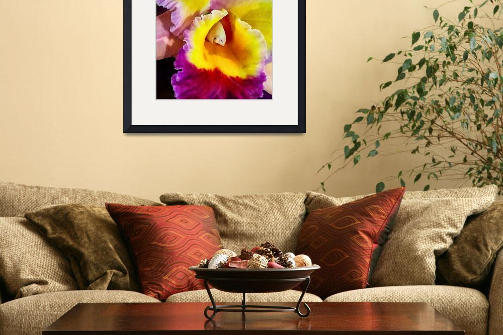 """""""Yellow and Magenta Cattleya Orchid&quot  (2013) by susansartgallery"""