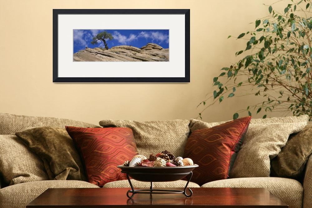 """""""Low angle view of a pinyon pine tree on a rock&quot  by Panoramic_Images"""
