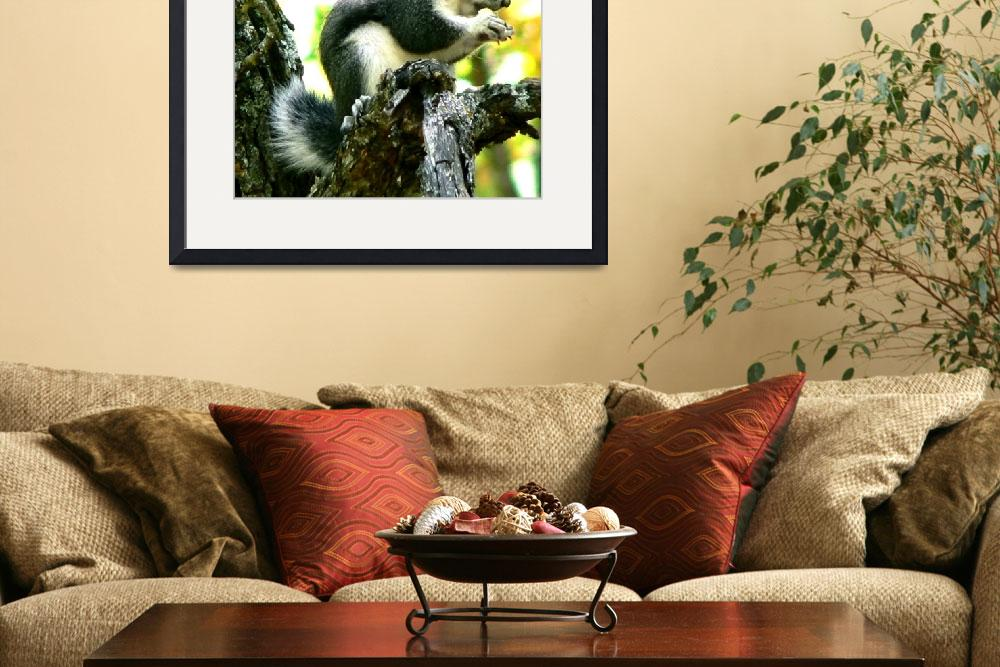 """Tufted Squirrel""  (2008) by rayjacque"