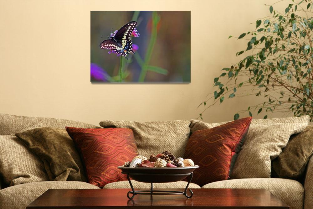 """Butterfly Black Swallowtail&quot  (2012) by KsWorldArt"