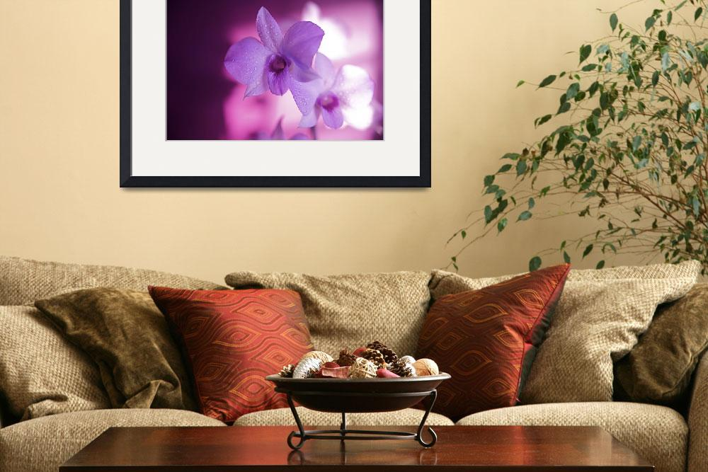 """""""Hawaii, Kauai, White Orchid With Pink Lighting&quot  by DesignPics"""