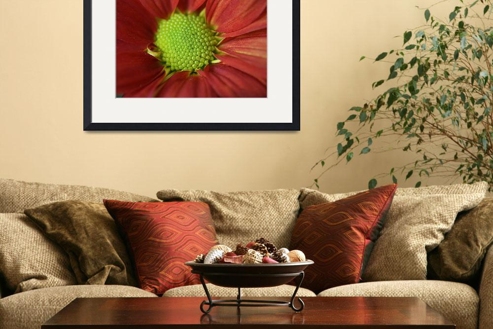 """""""RED DAHLIA MACRO&quot  (2011) by edesigns15"""