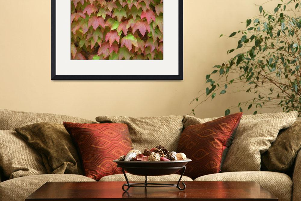 """""""Red and Green leaves""""  (2008) by Loloswain"""