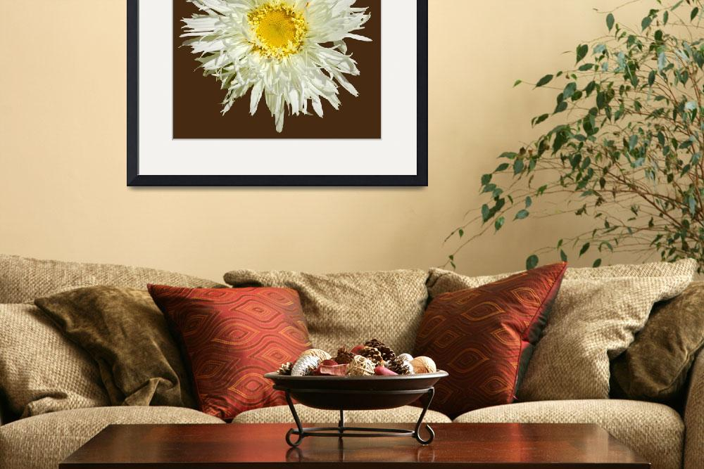 """""""White Shaggy Shasta Daisy On Brown&quot  (2008) by budo"""
