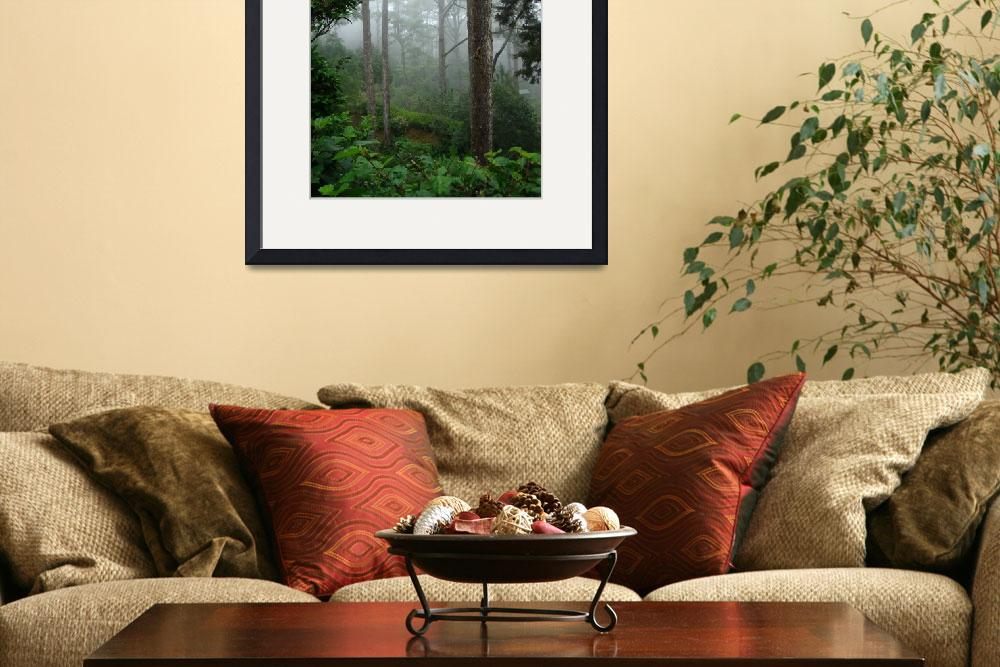 """""""Foggy Forest&quot  (2009) by alymariephotography"""