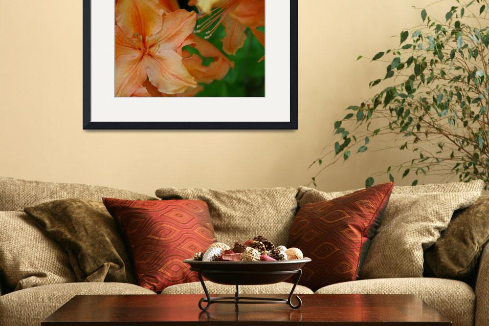 """""""IMG_8169 orange rhodendrum&quot  (2009) by AlyceTaylor"""