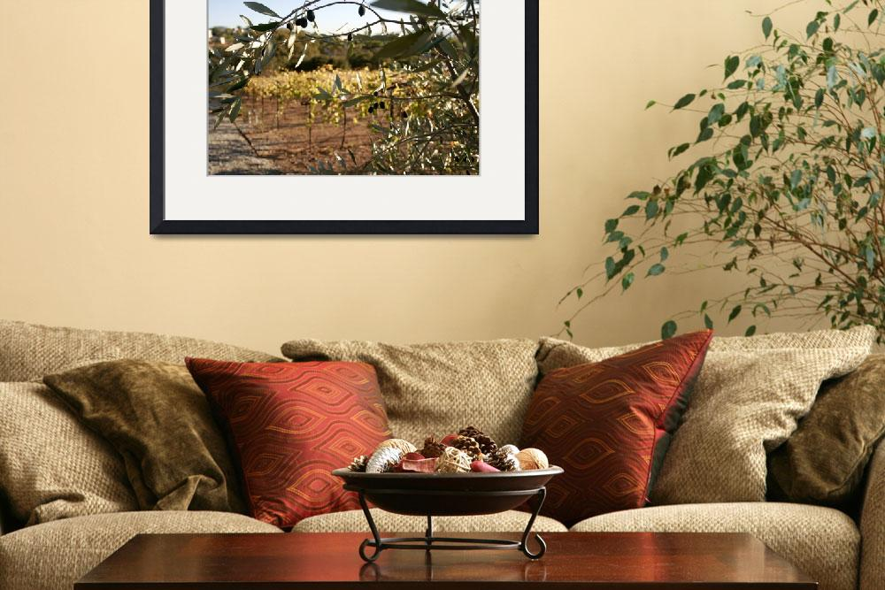 """""""WineCountry_OliveTree_22&quot  (2009) by SBCountyImages"""