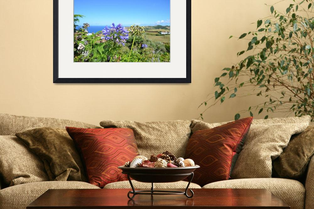 """Wild Agapanthus In The Azores""  (2012) by malcolmsnook"