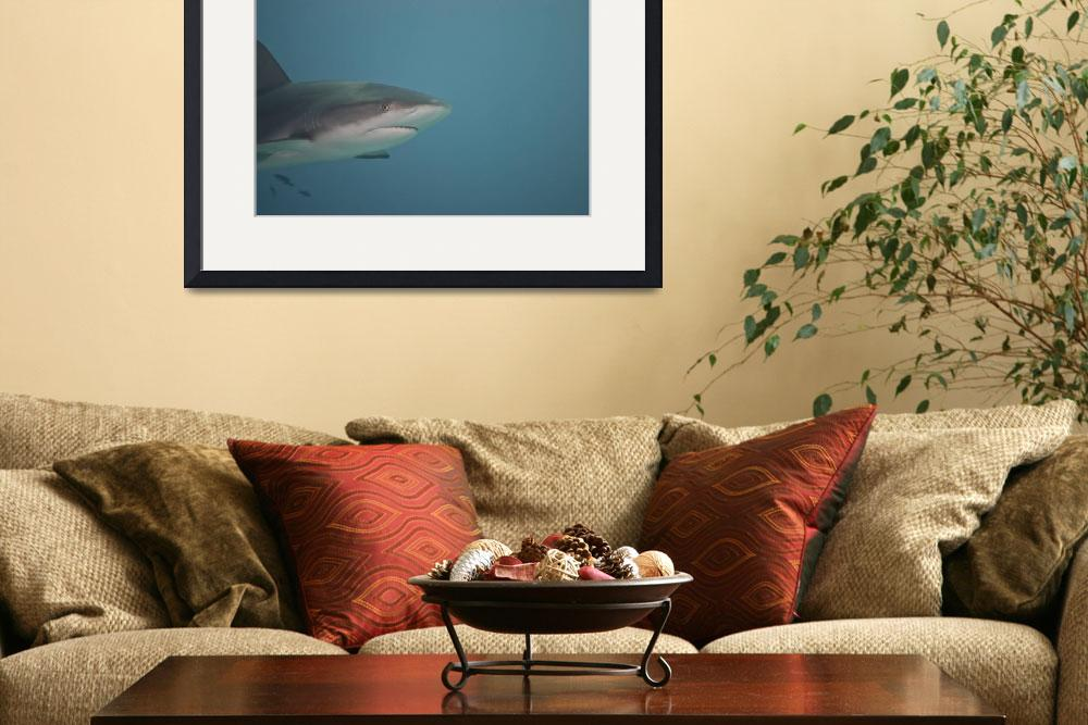 """Gray Reef shark&quot  (2012) by Mac"