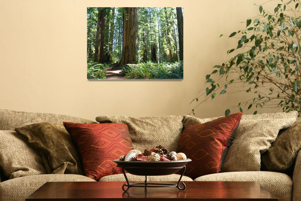"""""""Redwoods Trees Forest art prints Baslee&quot  (2011) by BasleeTroutman"""