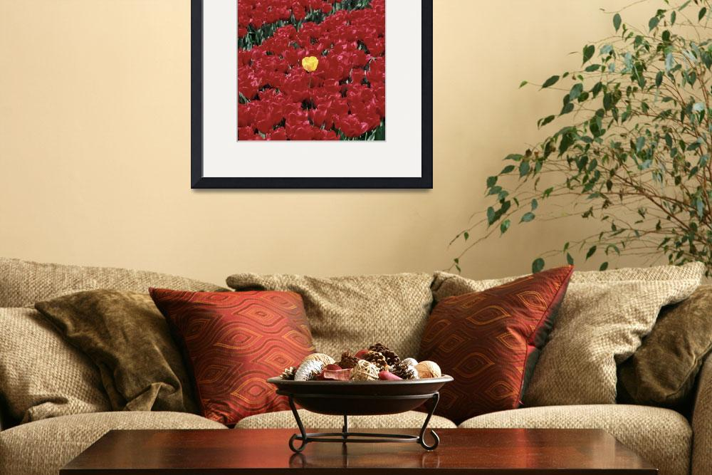 """""""Tulips&quot  (2014) by myworldtravelimage"""