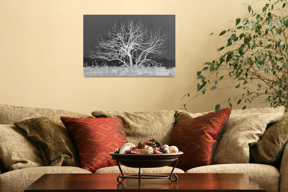 """""""Bare Tree""""  (2014) by DiegoRe"""