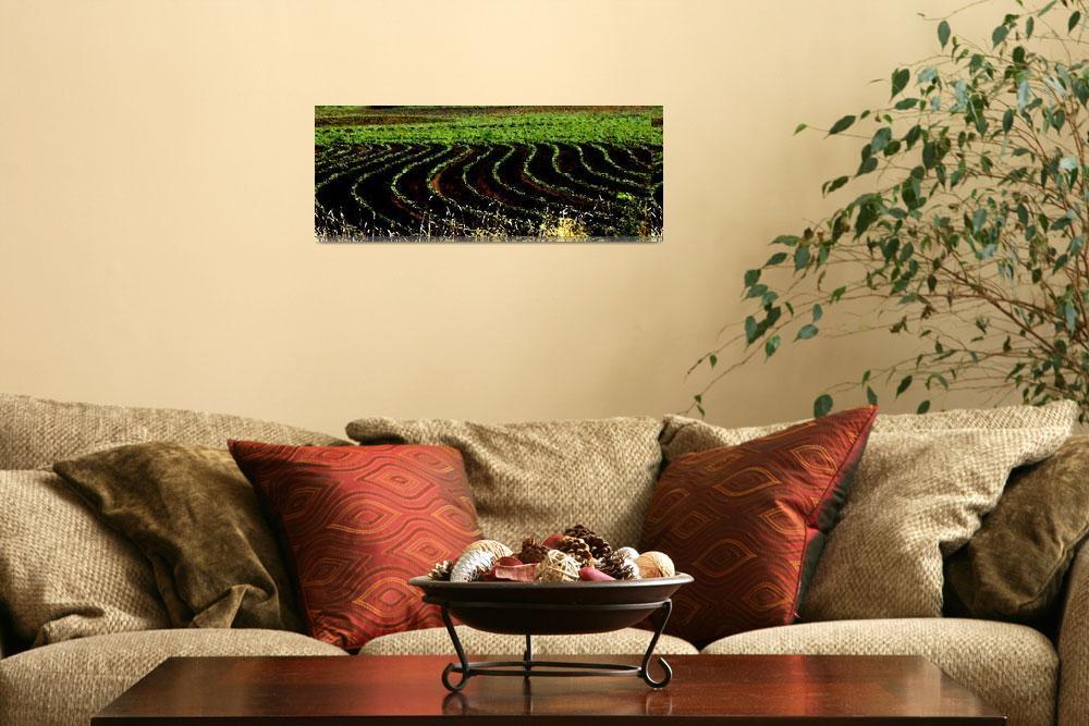 """""""Cotton Field""""  (2009) by angelabranigan"""