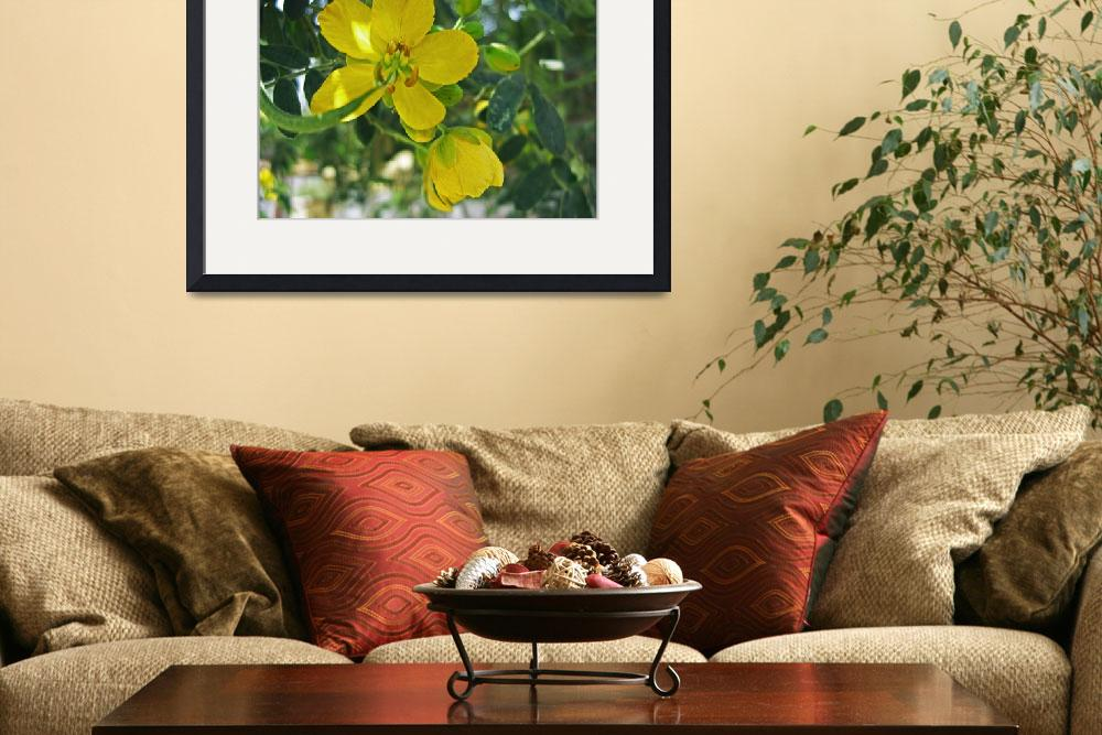 """""""Caesalpinia Mexicana or Cassia 1&quot  (2009) by ChristopherInMexico"""