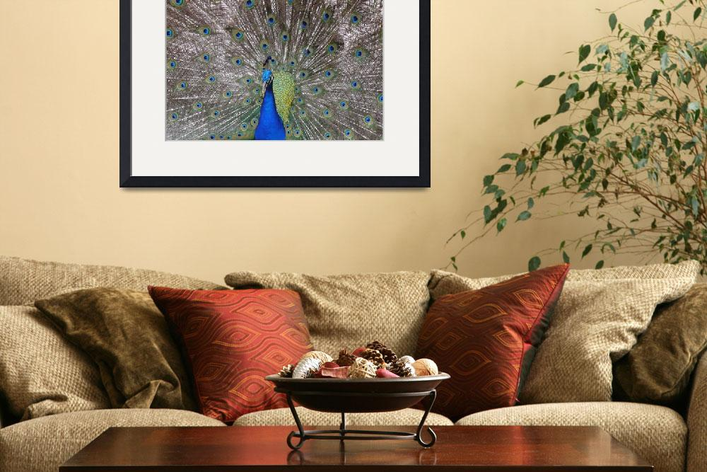 """""""Peacock Plumage&quot  (2008) by stockphotos"""