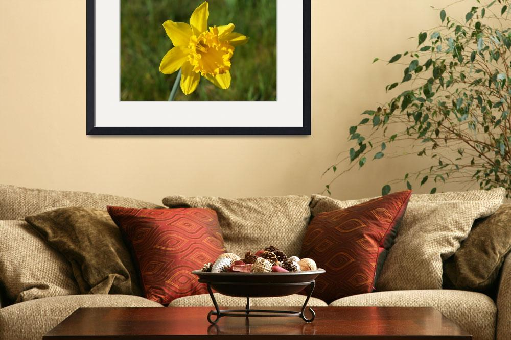 """Daffodils 16M Daffodil Flowers art prints Spring F&quot  (2014) by BasleeTroutman"