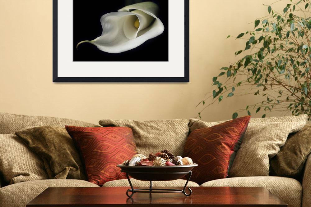 """calla lily&quot  (2005) by JulieScholz"