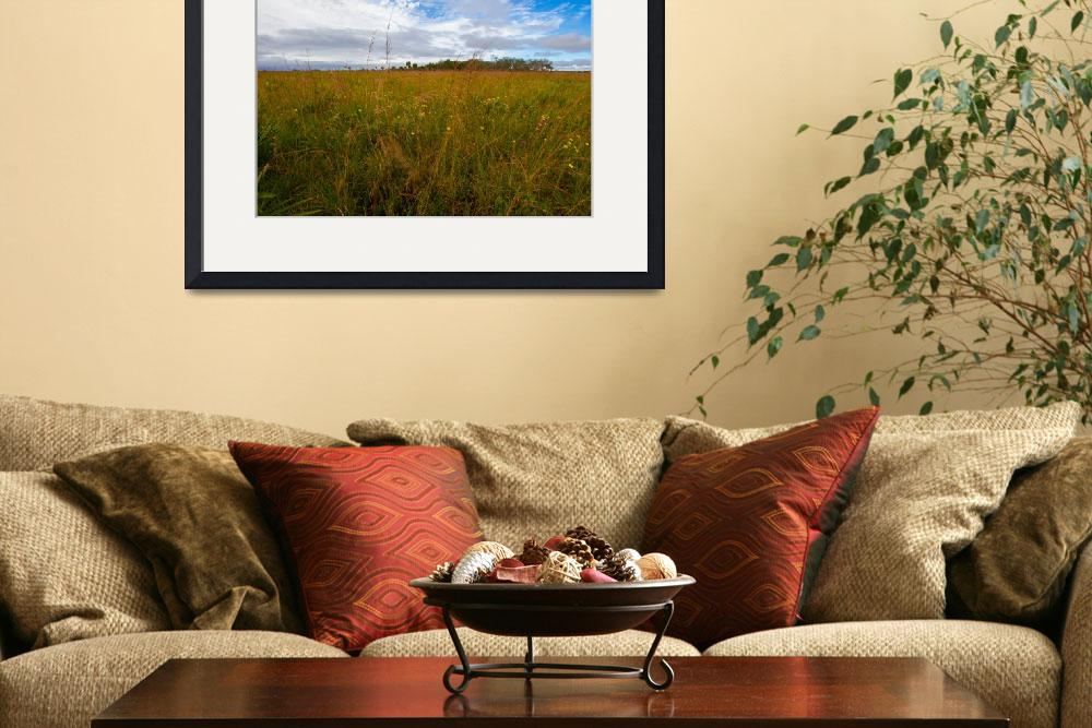 """""""Kissimmee Prairie Preserve State Park, Florida&quot  by happysights"""