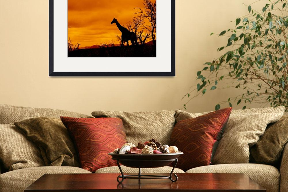 """Giraffe in South African Landscape&quot  (2009) by JonathanCJPhoto"