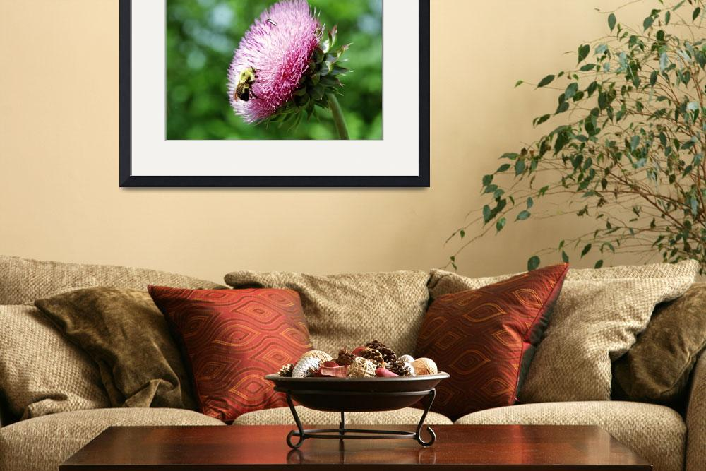 """""""Bumble Bee on Wild Thistle&quot  (2005) by eshramko"""