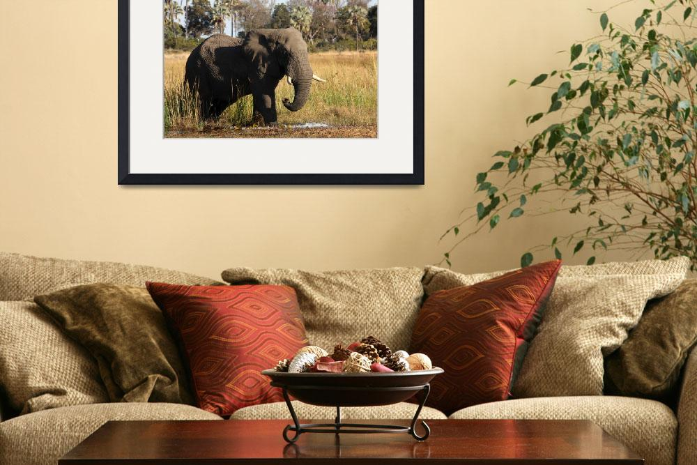 """""""African Elephant""""  (2009) by malcolmbowling"""