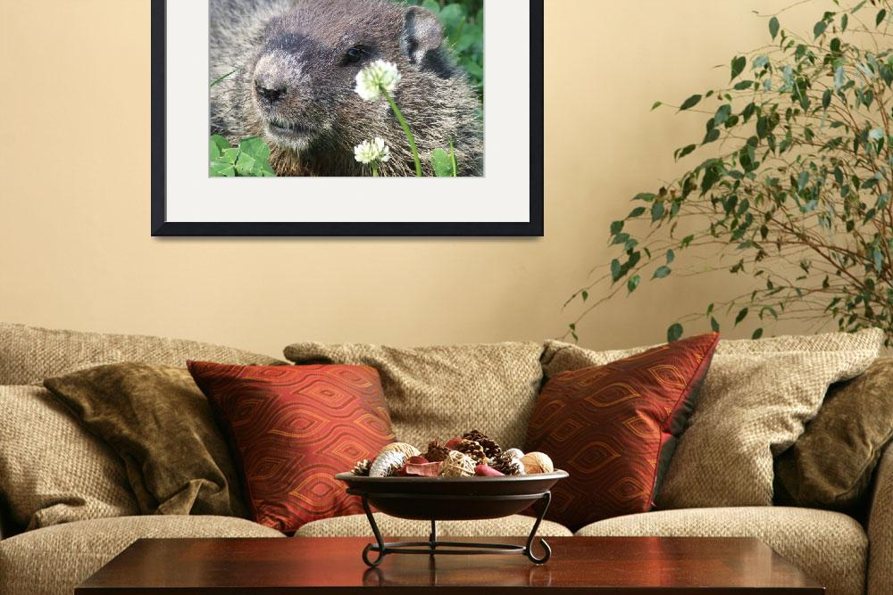 """""""Beaver in clover&quot  (2009) by Hartphotography"""