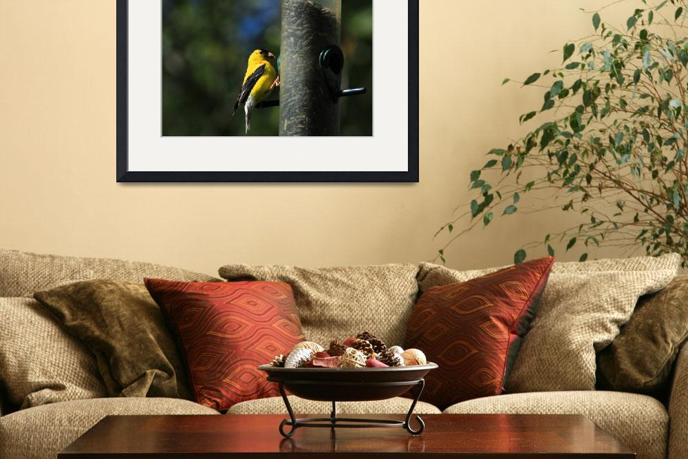 """""""American Goldfinch Collecting Seeds&quot  (2015) by rhamm"""