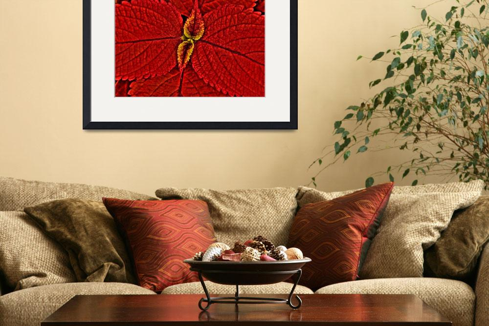 """Red Coleus""  (2008) by robhuntley"